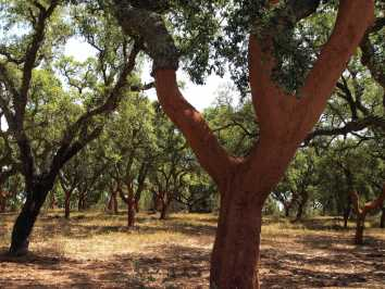 101 Uses for Olive and Cork Trees